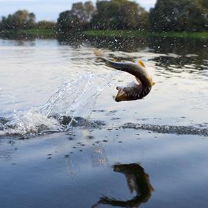 La pêche en Dordogne