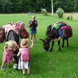 Les animaux de la campagne au camping