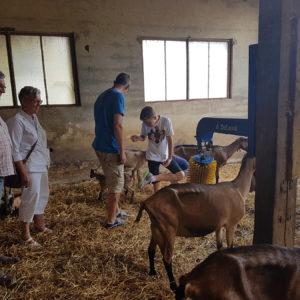 Visite de la fromagerie en Perigord