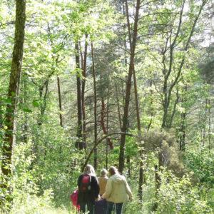 Randonnée pédestre à proximité de Sarlat